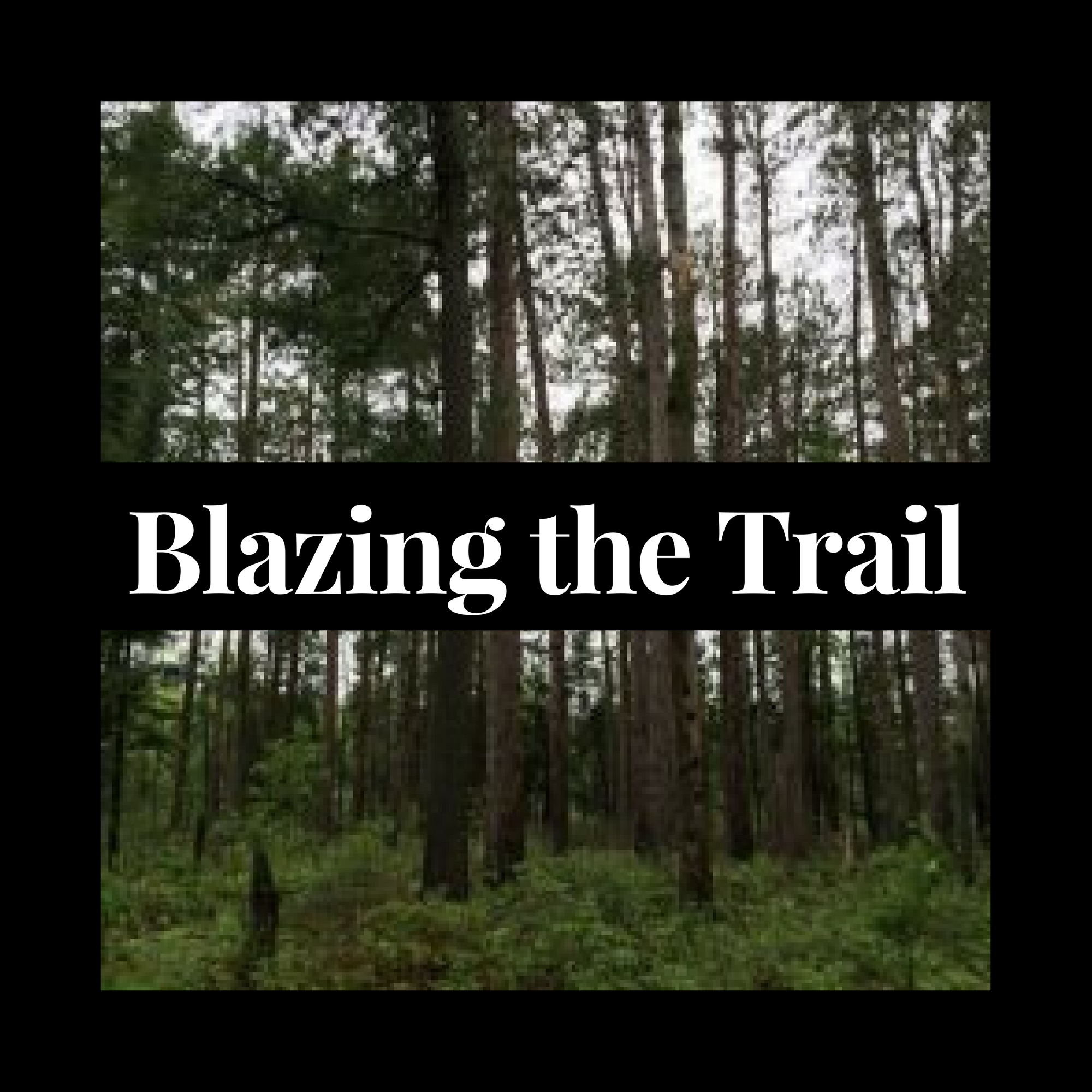 Blazing the Trail
